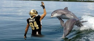 dolphins_playing with stills