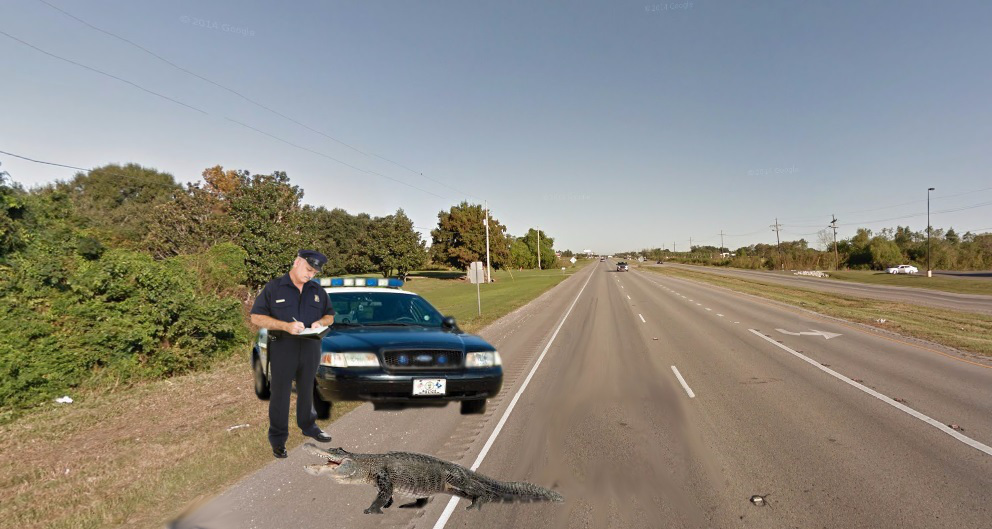 Alligator Ticketed In Golden Meadow Speed Trap | THE PUSH POLE
