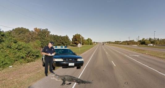 alligator getting ticket in golden meadow 1