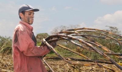 mexican sugar cane